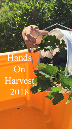 Wine Club Hands On Harvest 2018
